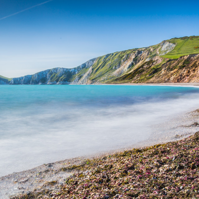 """Dorset's Perfection"" stock image"