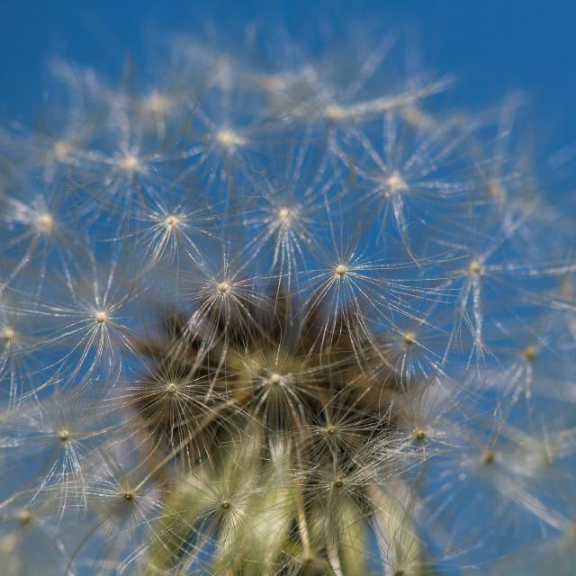 """Make a wish!"" stock image"