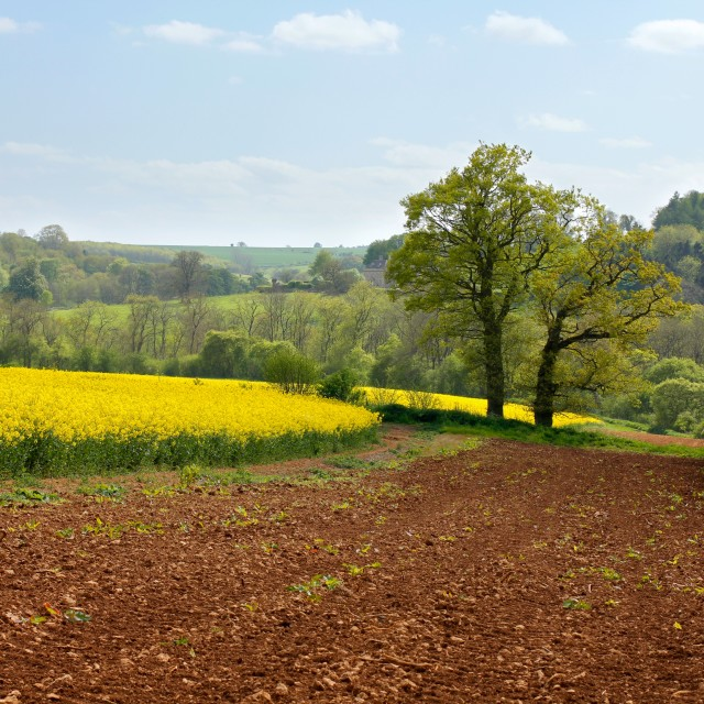 """""""Cotswolds Landscape and Large Country House"""" stock image"""