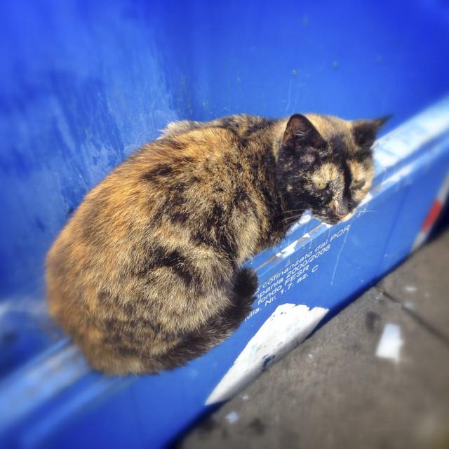 """Ferral cat on a rubbish bin"" stock image"