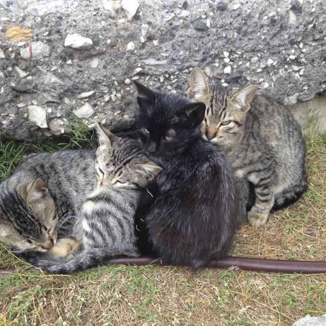 """""""Feral kittens"""" stock image"""