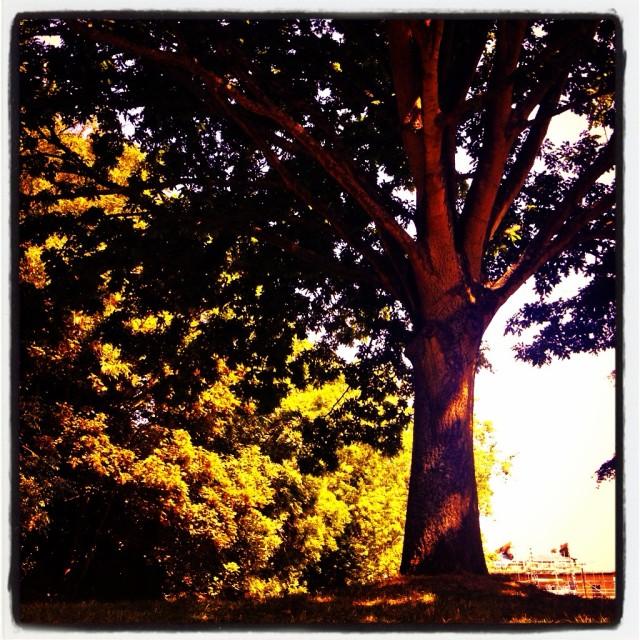 """trees and sunshine"" stock image"