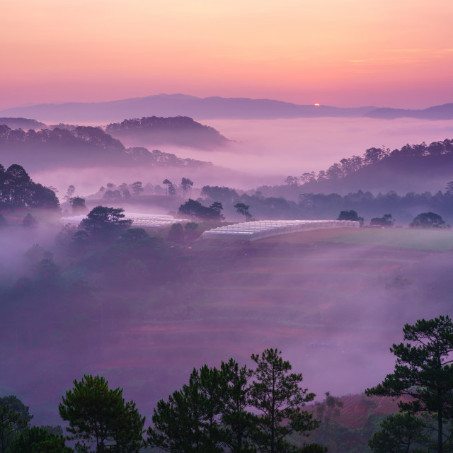 """Vietnam Misty dreamy landscape : Dalat Foggy valley in sunrise"" stock image"