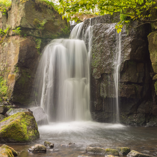 """""""Watery Derbyshire Glade"""" stock image"""