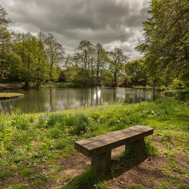 """Mill Pond Seat"" stock image"