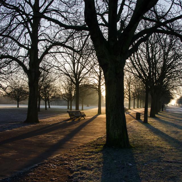 """Greenwich Park sunrise"" stock image"
