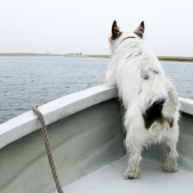 """""""Dog on a boat"""" stock image"""