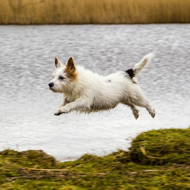 """""""Flying dog"""" stock image"""