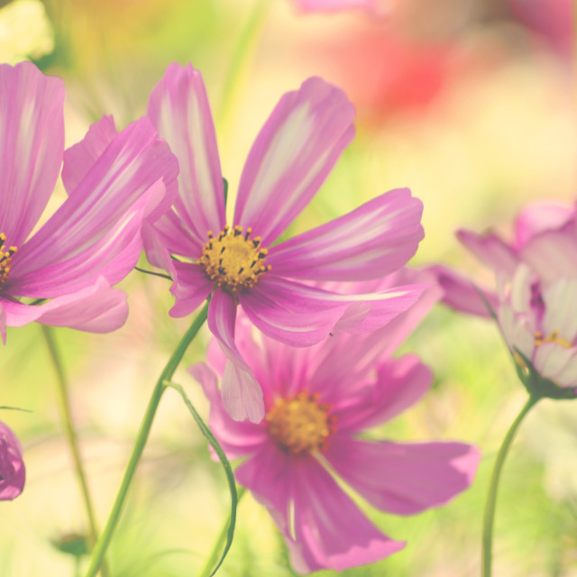 """summer flowers"" stock image"
