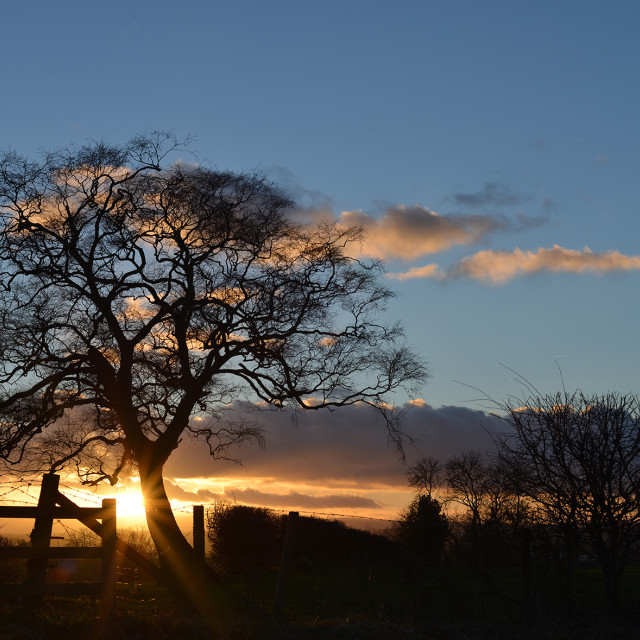 """Silhouette at Sundown"" stock image"
