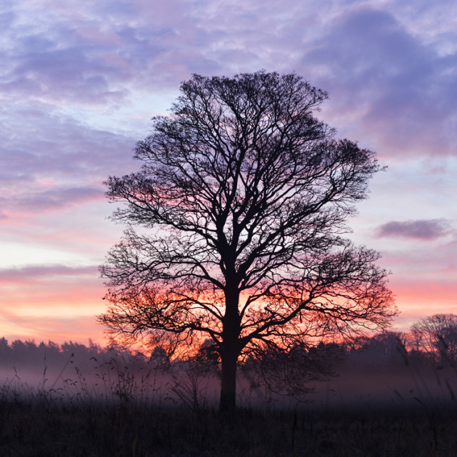 """Mist at Sunrise"" stock image"