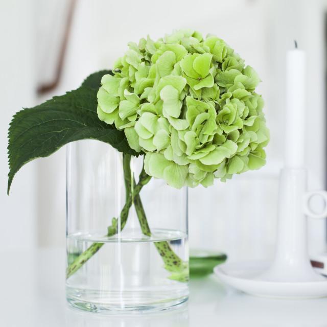 """""""Hydrangea in vase"""" stock image"""
