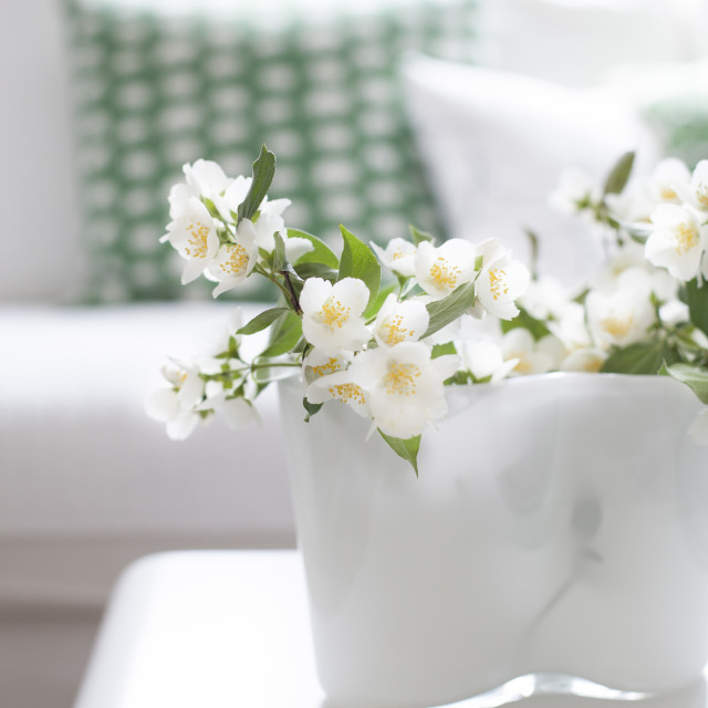 """Philadelphus in vase"" stock image"