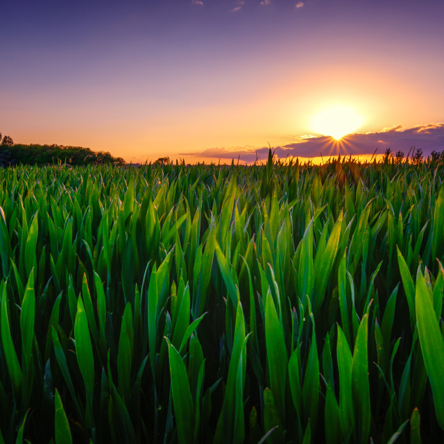 """""""Sun Smiles On The Crops"""" stock image"""