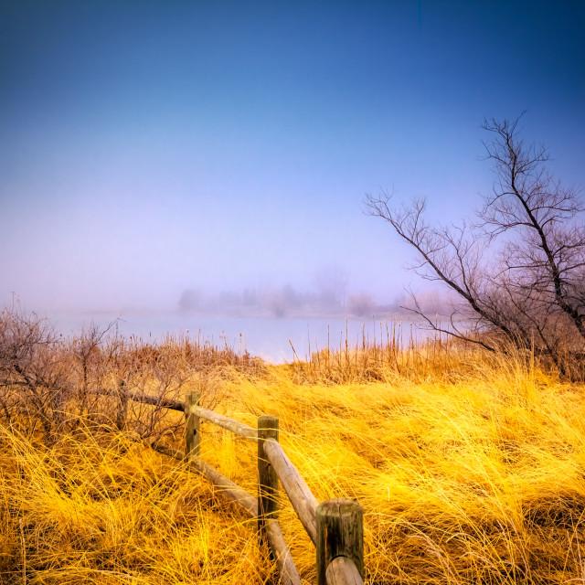 """""""Golden Fog"""" stock image"""