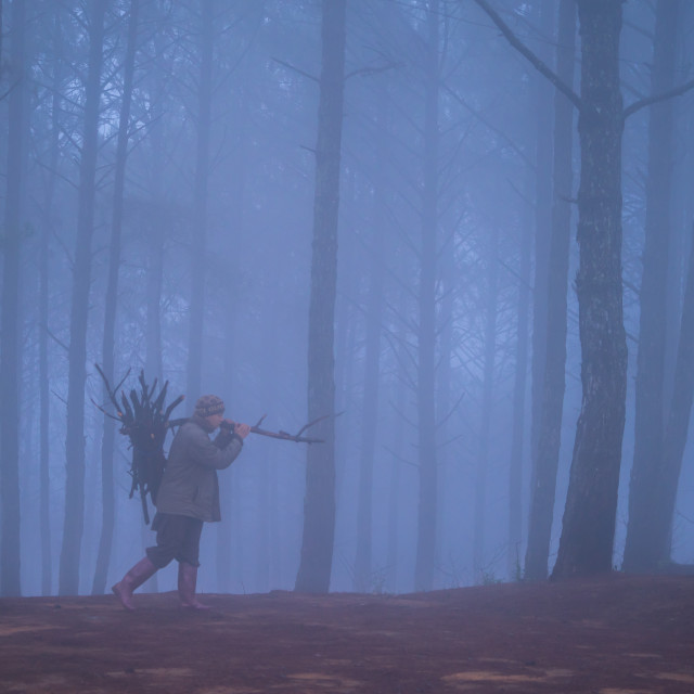 """Wood collector walking foggy forest"" stock image"