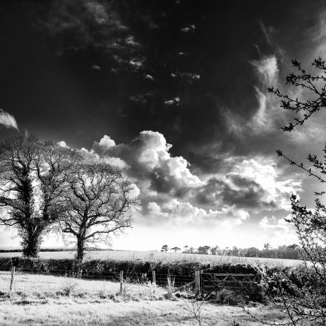 """Dramatic B&W Landscape"" stock image"
