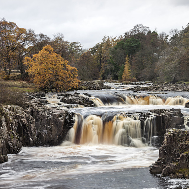 """Low Force Waterfall on the River Tees in Autumn, Bowlees, Upper Teesdale, County Durham England. UK"" stock image"