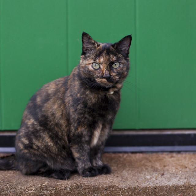 """""""Cat in front of green door"""" stock image"""