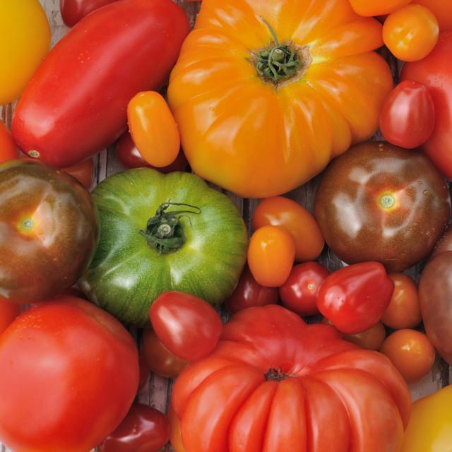 """""""tomatoes background"""" stock image"""