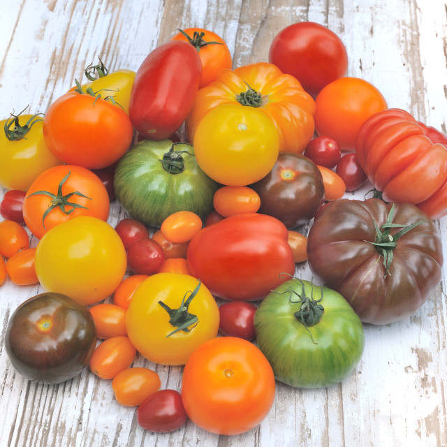 """""""assortment of tomatoes"""" stock image"""
