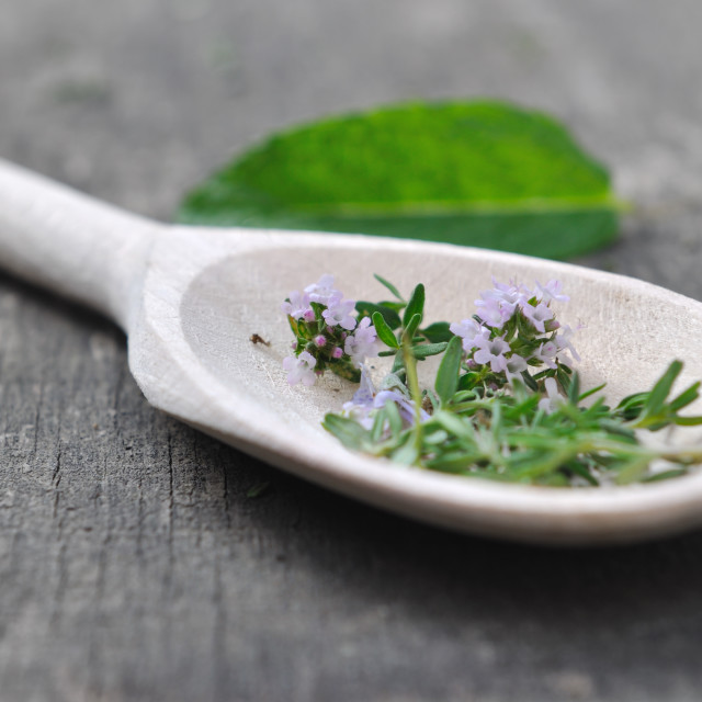 """thyme in wooden spoon"" stock image"