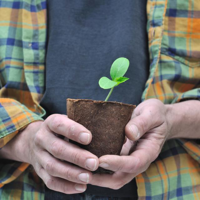 """""""gardener holding seedling"""" stock image"""