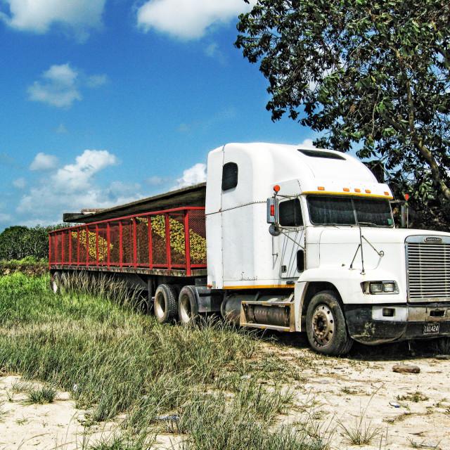 """""""Citrus truck"""" stock image"""