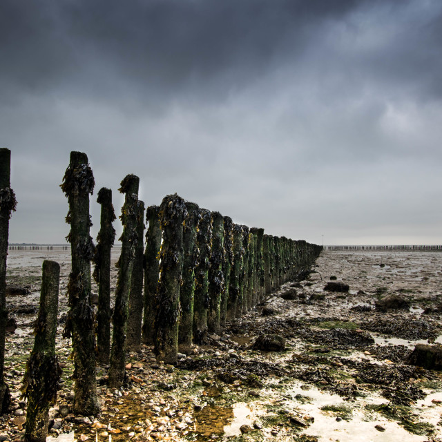 """Groynes at low tide"" stock image"