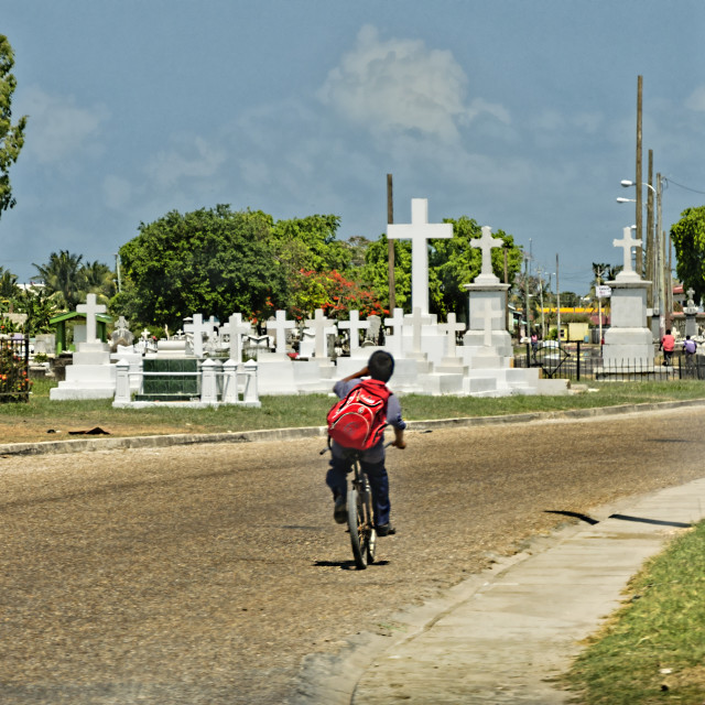 """""""Road through a cemetery"""" stock image"""