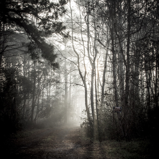 """""""Mystic Forest"""" stock image"""