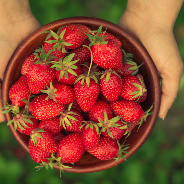 """Hands holding fresh strawberries in a bowl"" stock image"