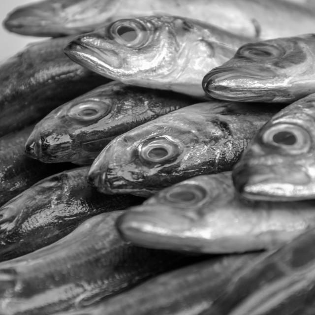 """""""Fishing in Bulgaria"""" stock image"""