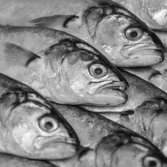 """""""Seafood"""" stock image"""