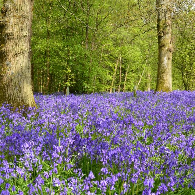 """Springtime in England."" stock image"