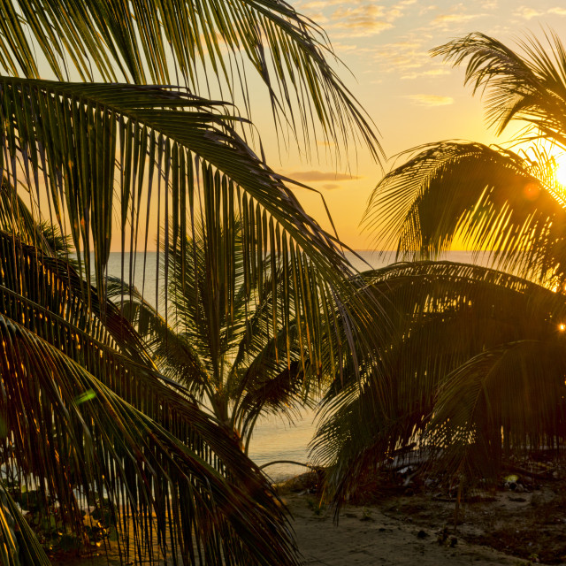 """""""Sunrise and palm fronds"""" stock image"""