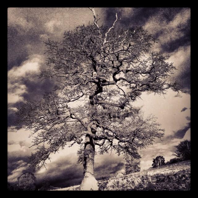 """tree B&W"" stock image"