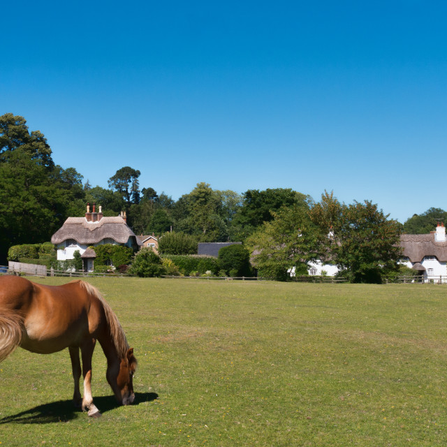 """Swan Green, Lyndhurst, New Forest"" stock image"
