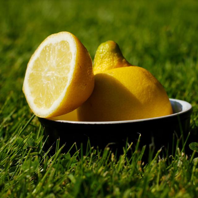 """""""Refreshing Sliced Lemon Outdoors on Grass"""" stock image"""