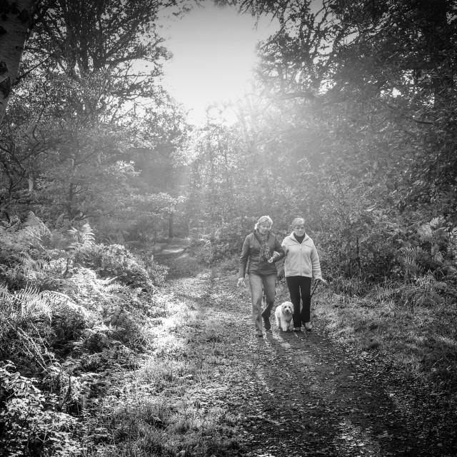 """""""Sherwood Forest"""" stock image"""