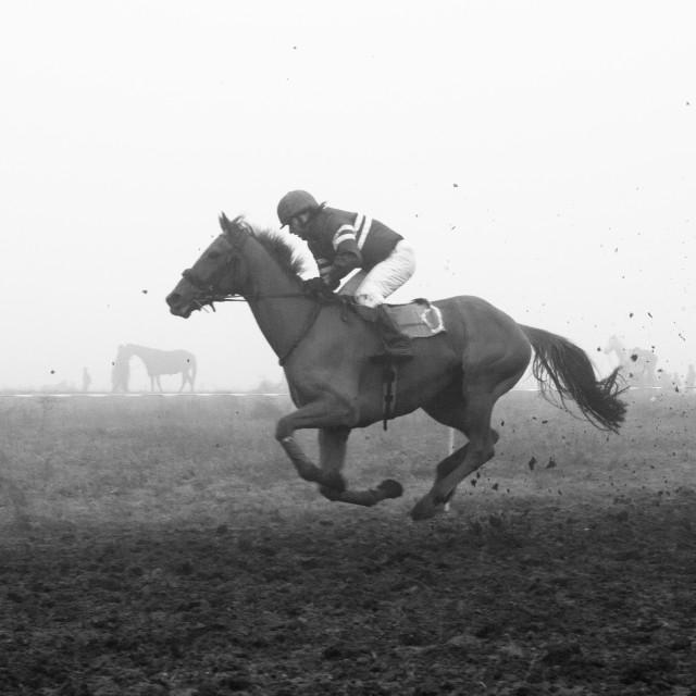 """Horse racing 3"" stock image"