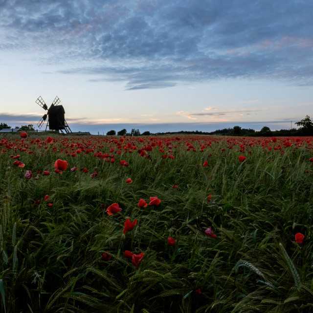 """Windmill on Poppy field"" stock image"