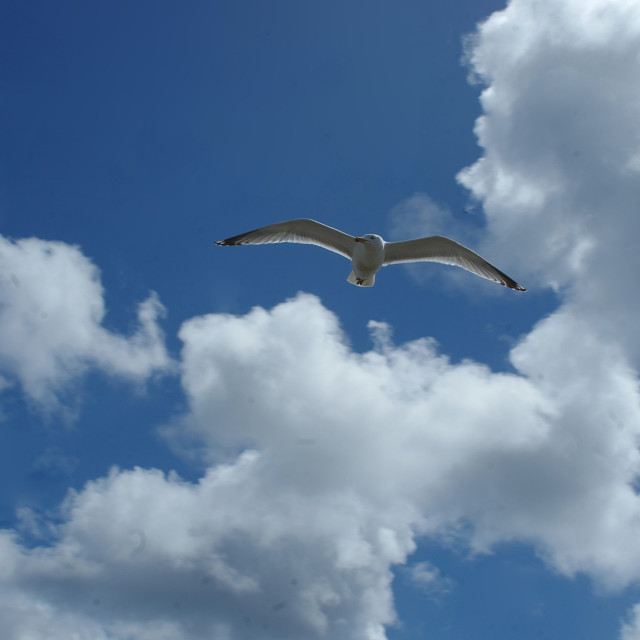 """""""Sea gull and clouds"""" stock image"""