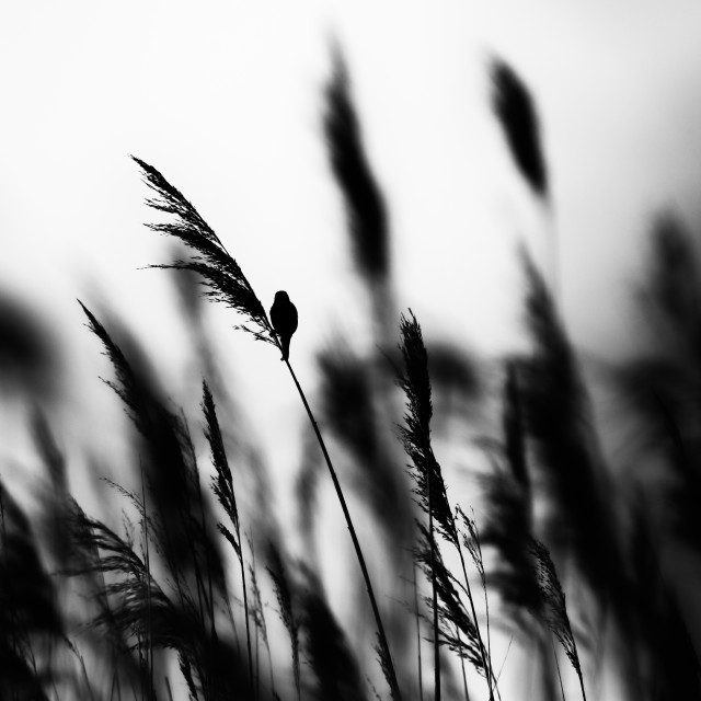 """In the long grass"" stock image"
