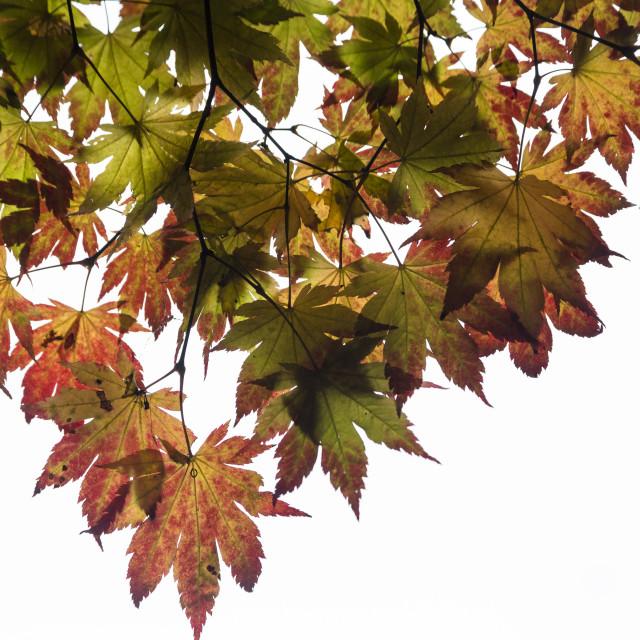 """Autumn Colour 2"" stock image"