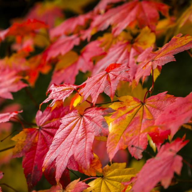 """Autumn's Glory"" stock image"