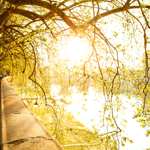 """Sunlight falling through the trees"" stock image"
