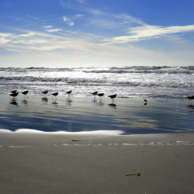 """Sandpipers at the beach"" stock image"