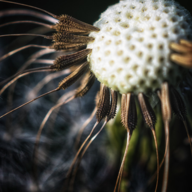 """Nature's pin cushion"" stock image"