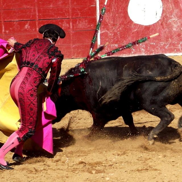 """Bullfight"" stock image"